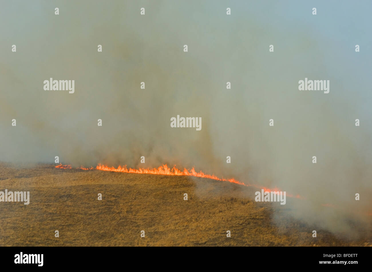 Aerial view of prairie grass fire Alberta Canada.. Dried winter grass ignites easily and fanned by wind quickly - Stock Image
