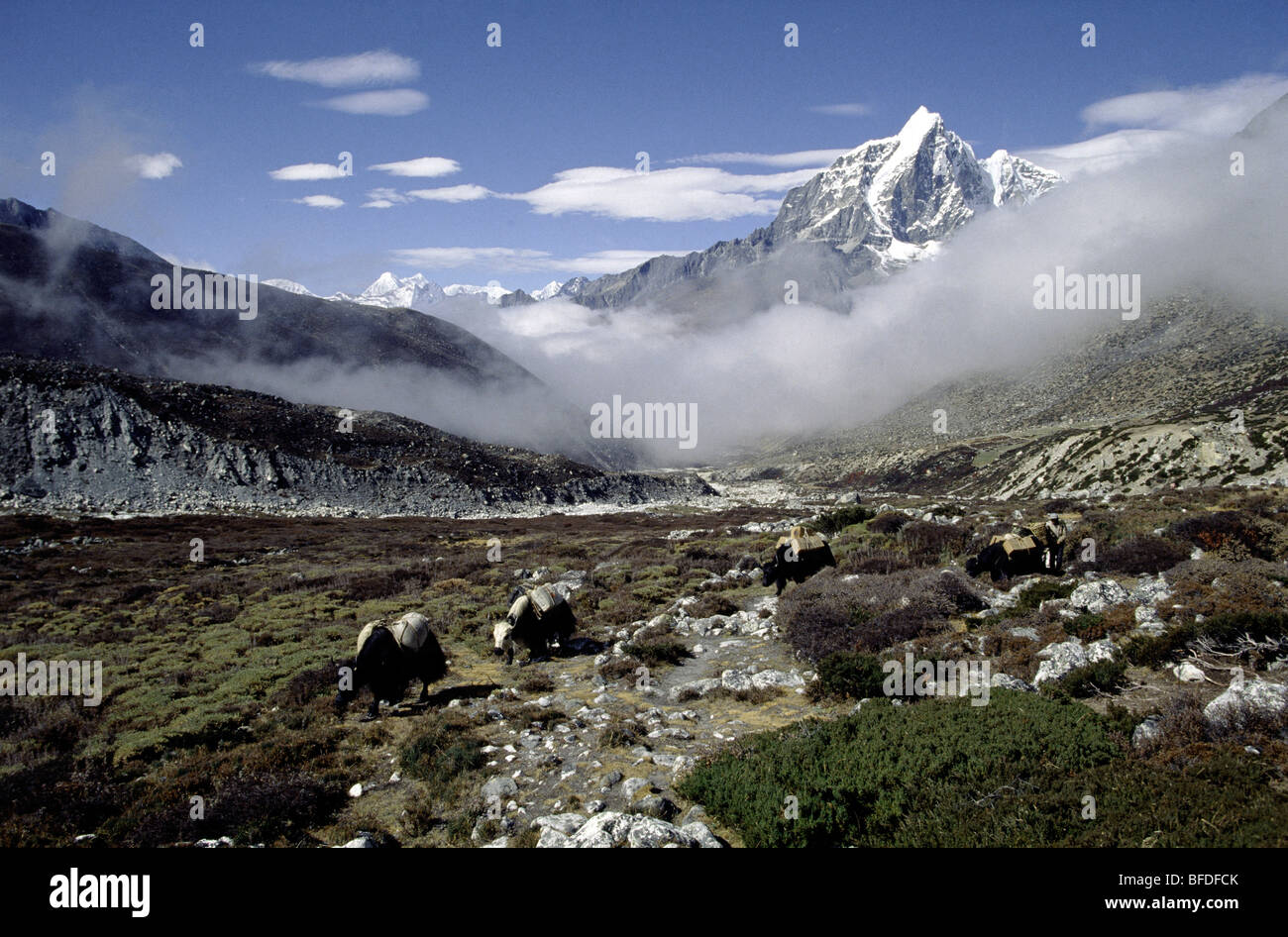 Yak caravans intermingle in a brilliant landscape cradled by the mountains of Nepal. - Stock Image