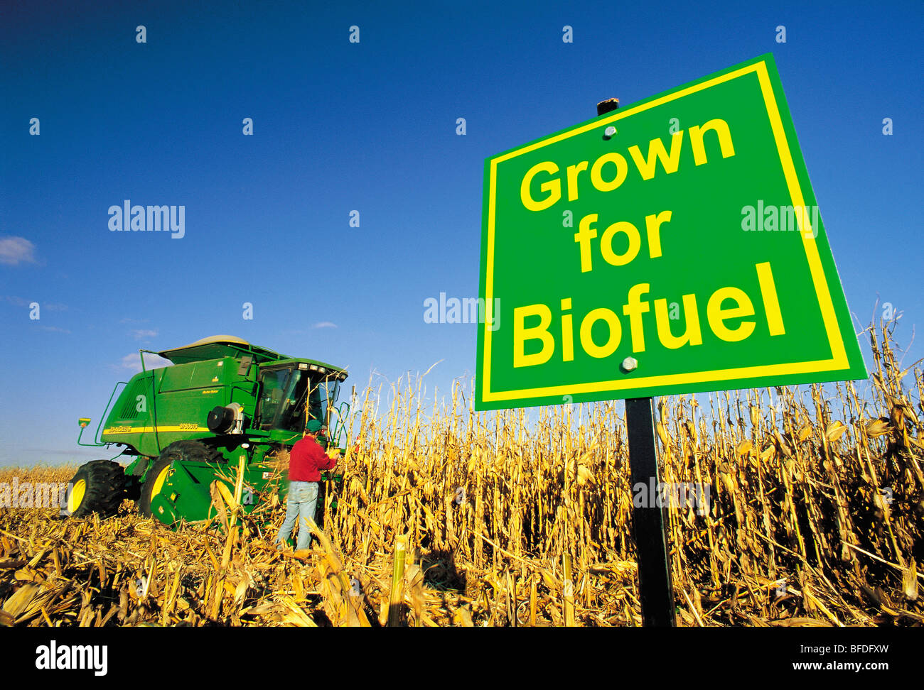 A farmer checks his feed corn crop being harvested for biofuel, near Carey, Manitoba, Canada - Stock Image
