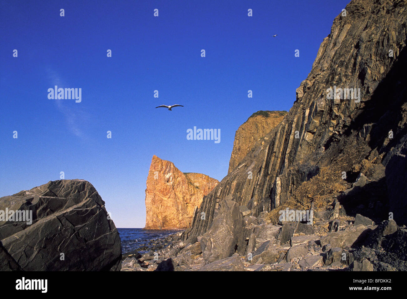 Seagulls flying above Perce Rock, Perce, Gaspe, Quebec, Canada - Stock Image