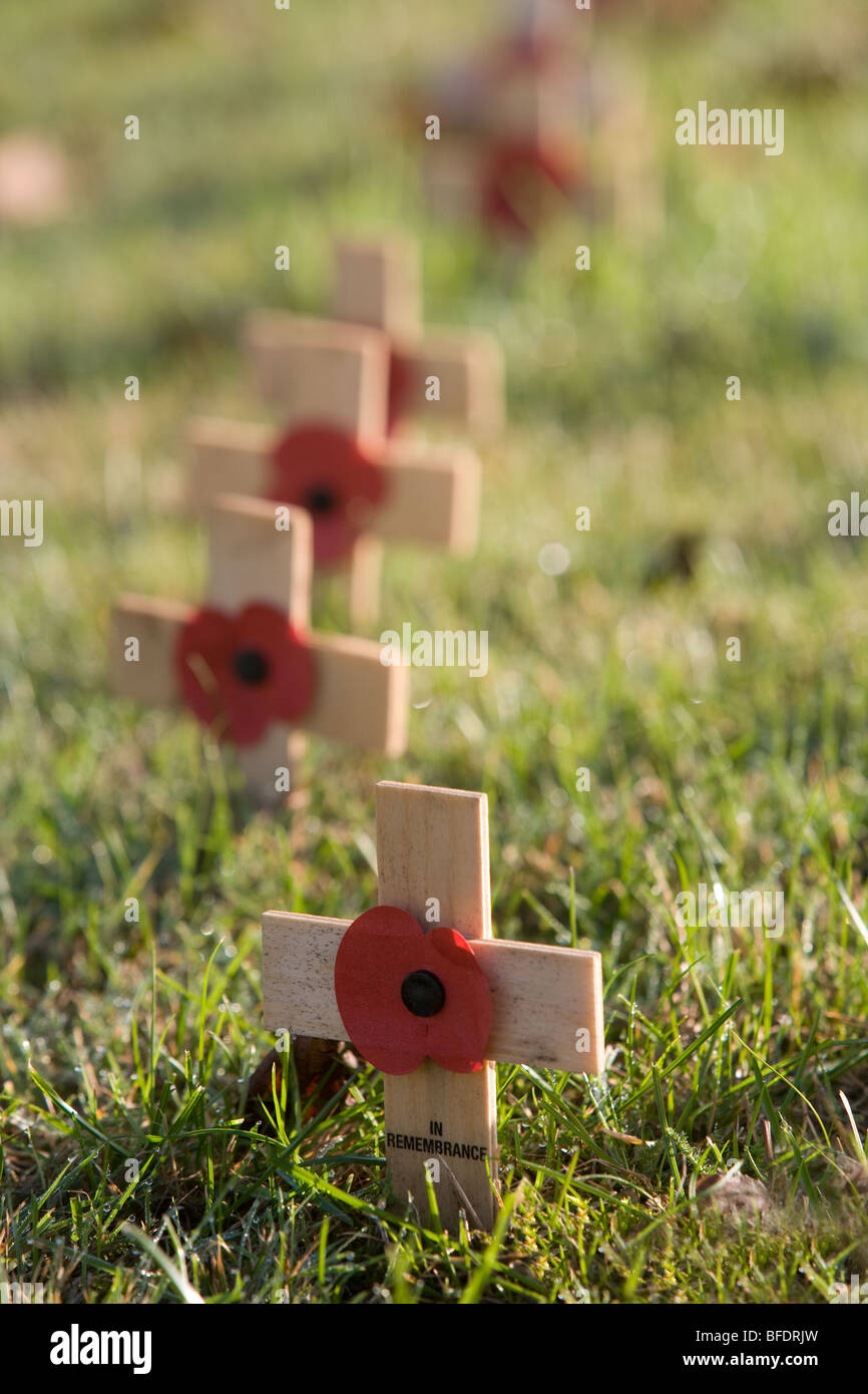 Poppies and Crosses on Remembrance Day - Stock Image