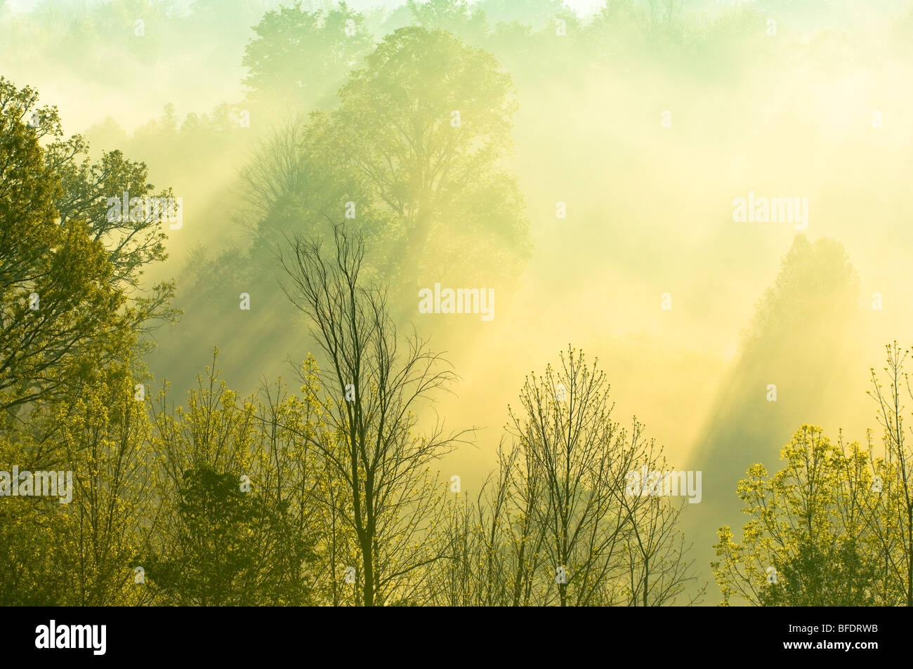 Morning sunlight filters through trees and mist over the Grand River near West Montrose, Ontario, Canada - Stock Image