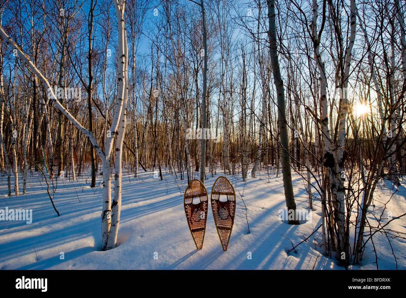 Birch (Betula papyrifera) forest and snowshoes in early spring, Mount Nemo Conservation Area near Burlington, Ontario, - Stock Image