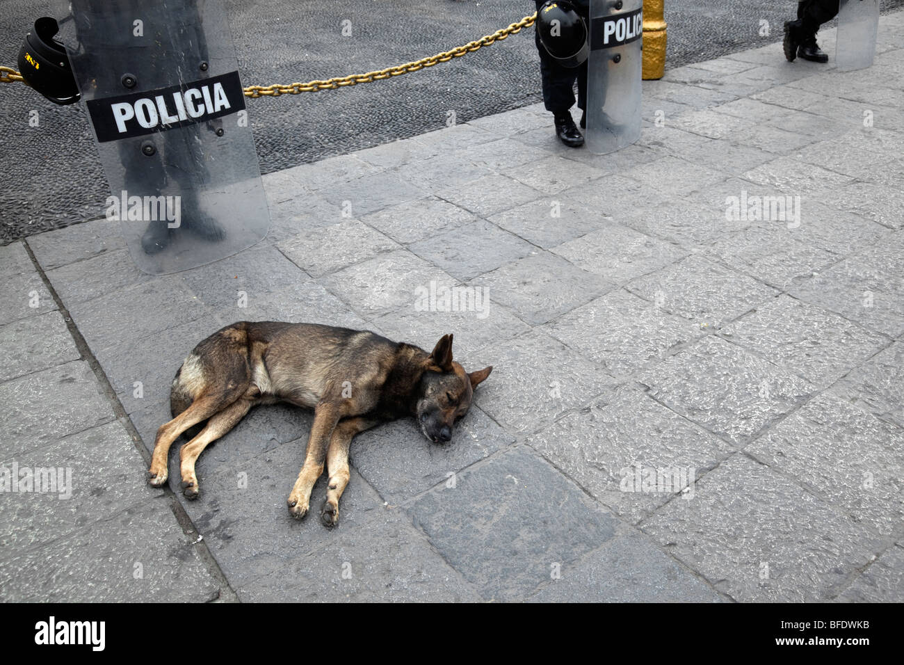 Mongrel dog asleep on pavement in front of Peruvian policemen, Plaza de Armas, Lima, Peru - Stock Image