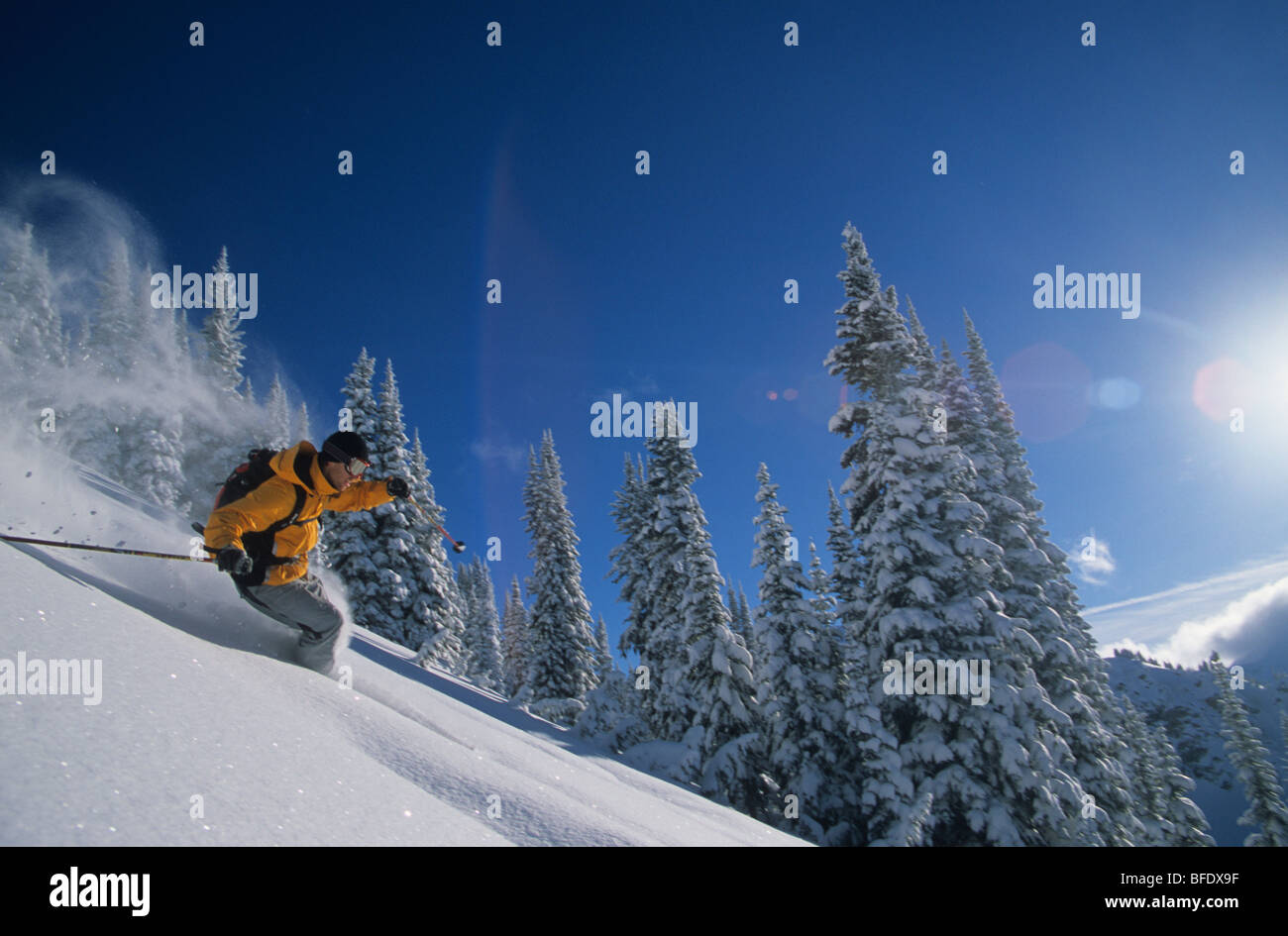 A skier making some powder turns at Cat Powder, Revelstoke, British Columbia, Canada - Stock Image