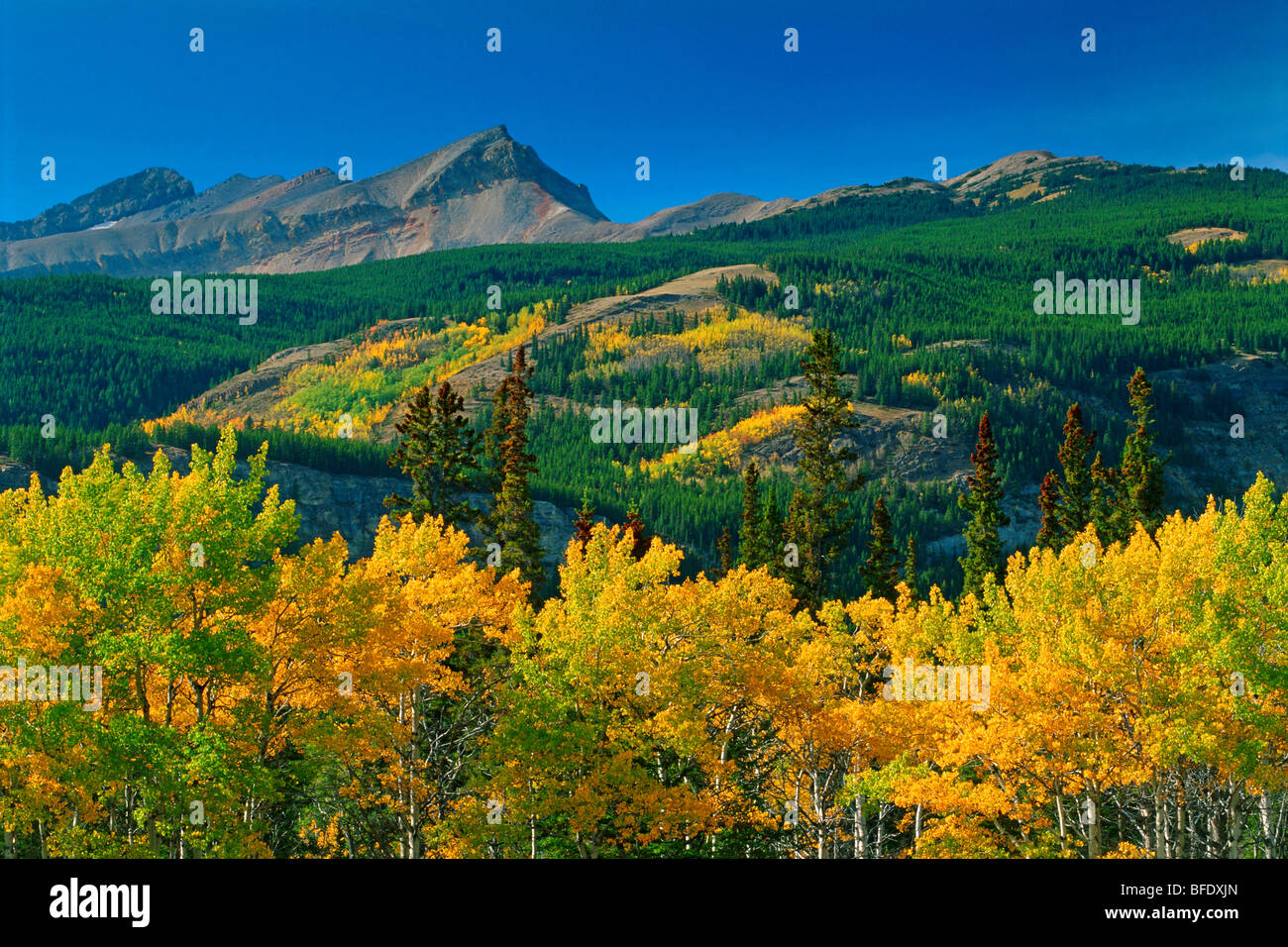 Autumn scenic in the Canadian Rockies, David Thompson Highway, Alberta, Canada - Stock Image