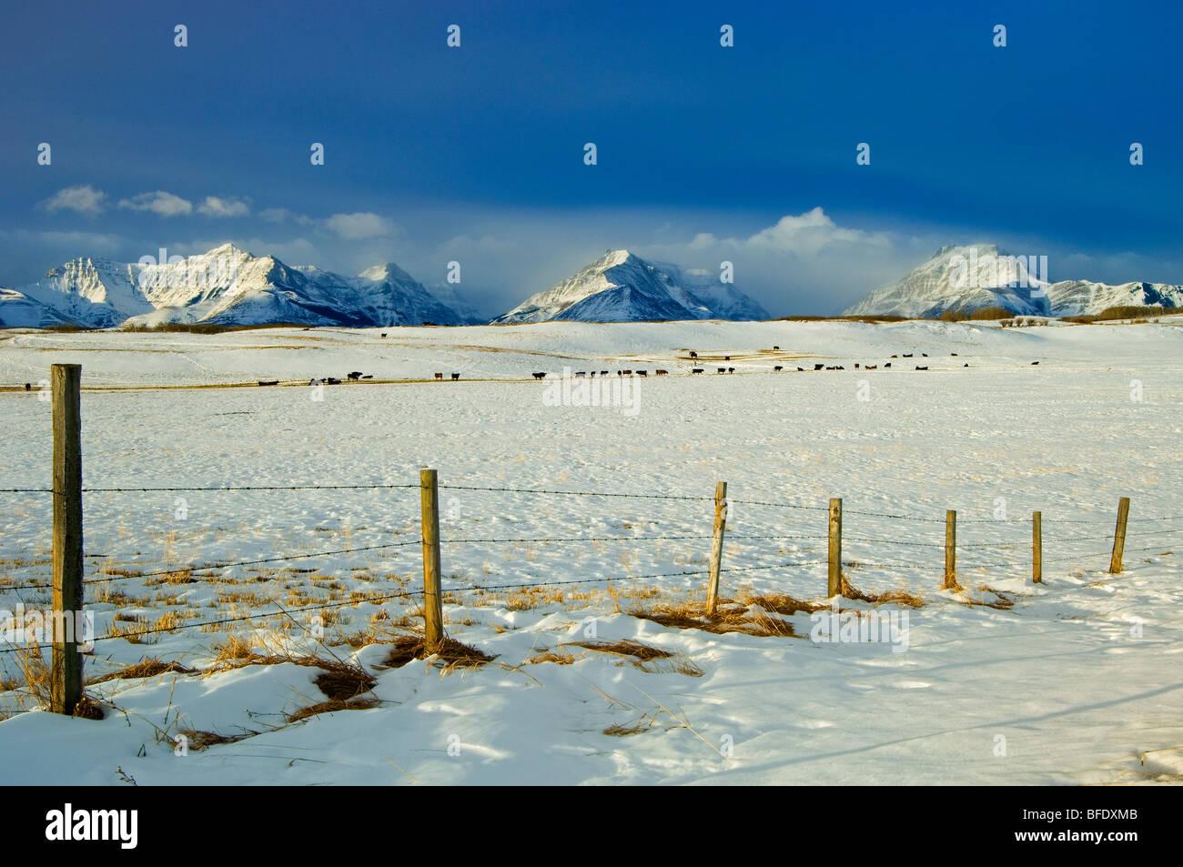 Snowy landscape where the prairies meet the mountains, near Twin Butte, Alberta, Canada - Stock Image