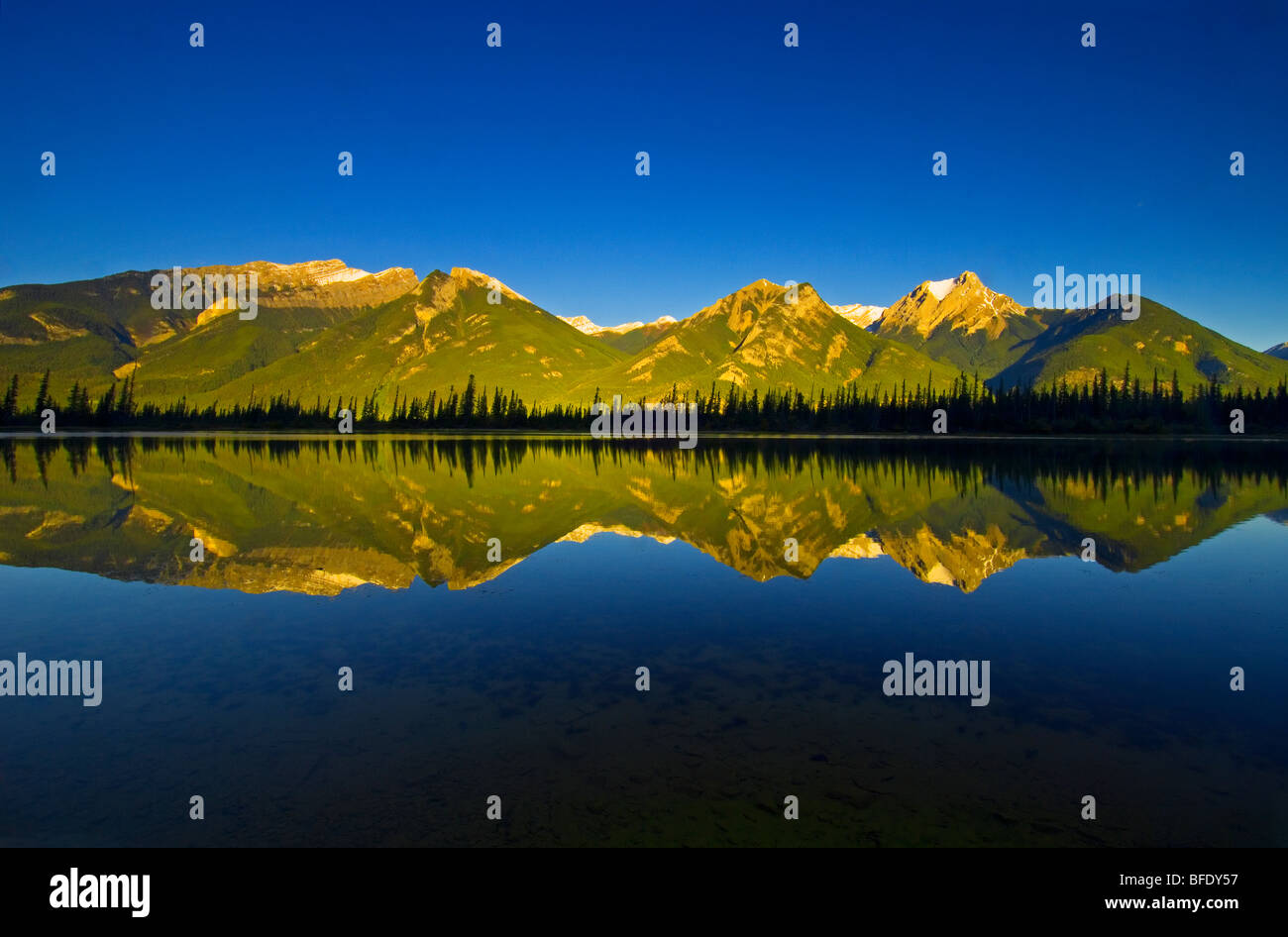Pond west of Jasper Lake at sunrise, Jasper National Park, Alberta, Canada. - Stock Image