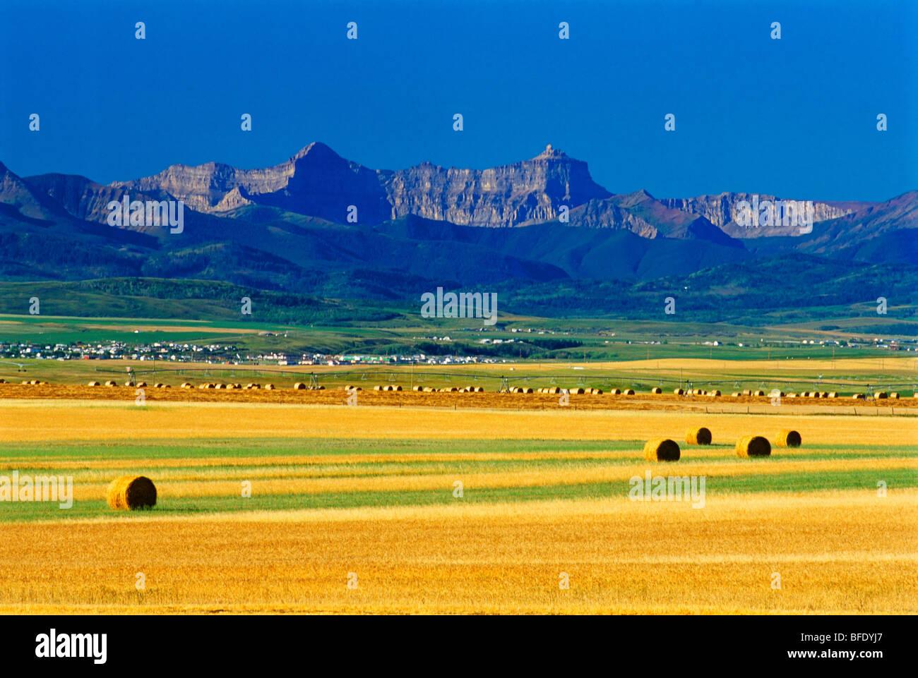 Farmland where the prairie meets the mountain near Pincher Creek, Alberta, Canada - Stock Image