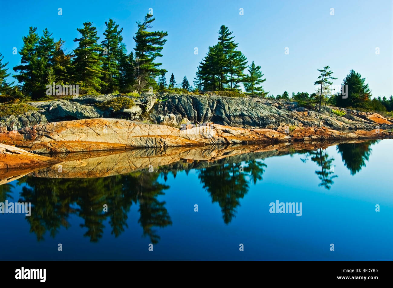 Eastern white pines (Pinus strobus) reflected in Georgian Bay, French River Provincial Park, Ontario, Canada - Stock Image