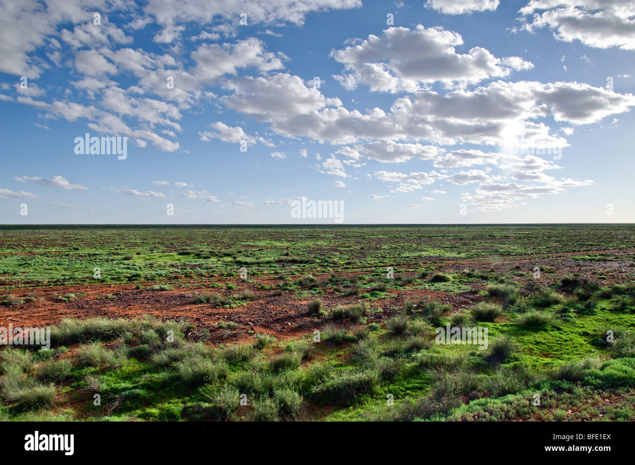 plants in the desert go green after rain - Stock Image