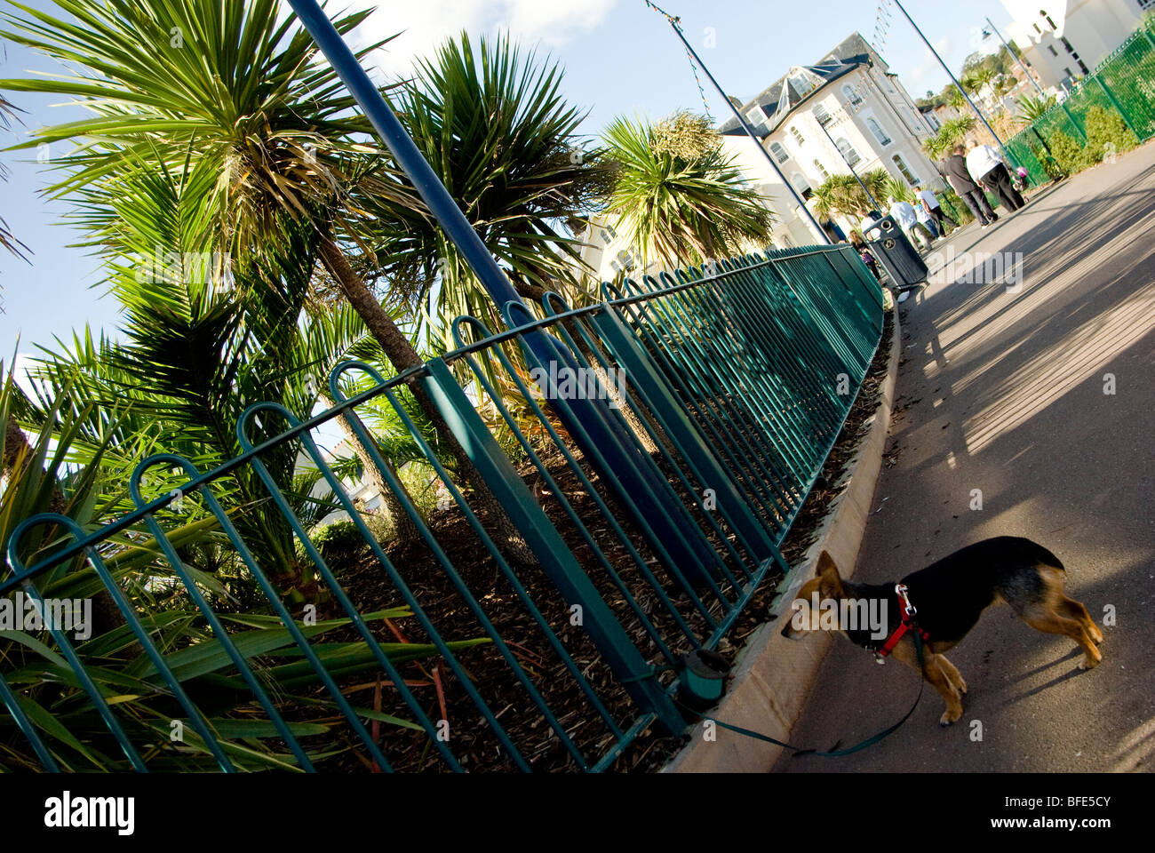 dog tied by leash to rails - Stock Image