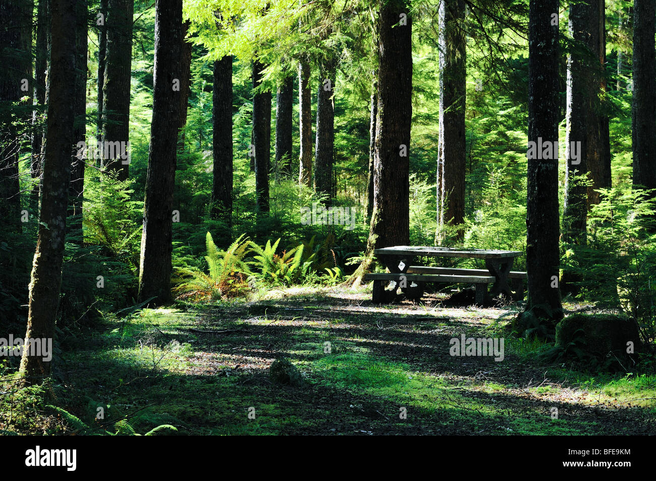 Picnic table set among trees, Marble River campsite near Port Alice, Vancouver Island, British Columbia, Canada - Stock Image