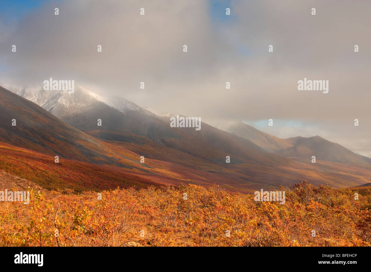 Autumn colours of the North Klondike Valley, Tombstone Territorial Park, Yukon, Canada - Stock Image