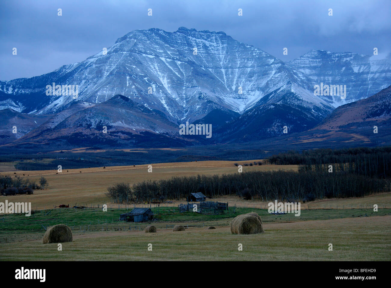 Abandoned farmstead with hay field around it outside of Waterton Lakes National Park, Alberta, Canada - Stock Image