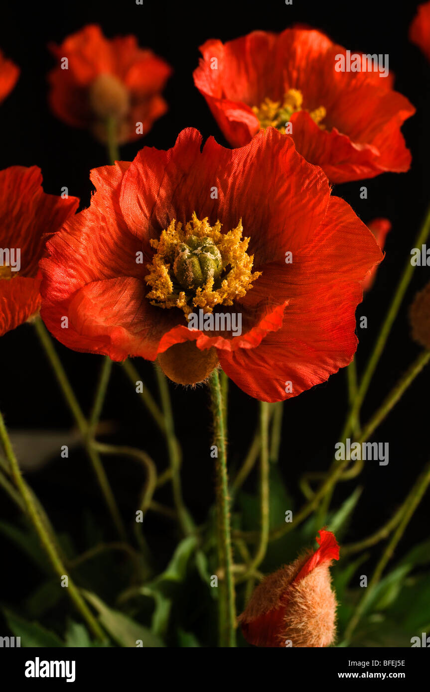 Artificial poppy flowers made of fabric stock photo 26751802 alamy artificial poppy flowers made of fabric mightylinksfo