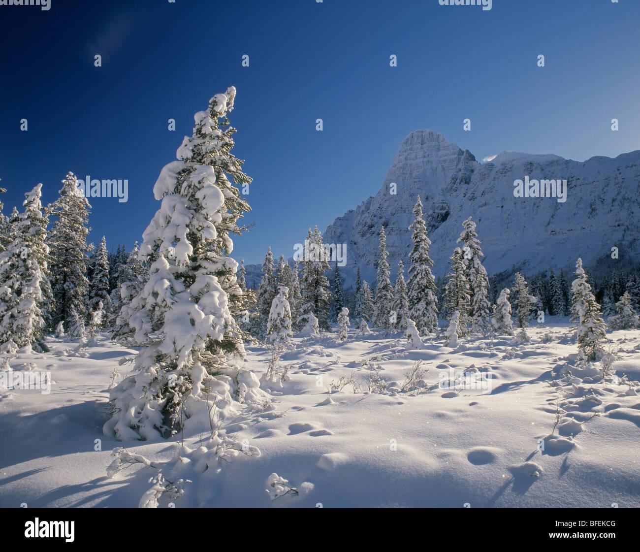 Mount Chephren and Mistaya Valley in winter, Banff National Park, Alberta, Canada - Stock Image