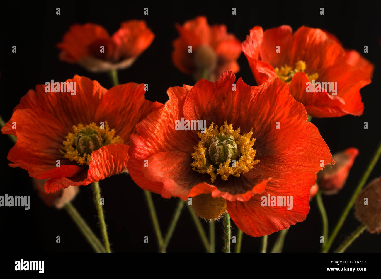 Artificial poppy flowers stock photo 26753009 alamy artificial poppy flowers mightylinksfo