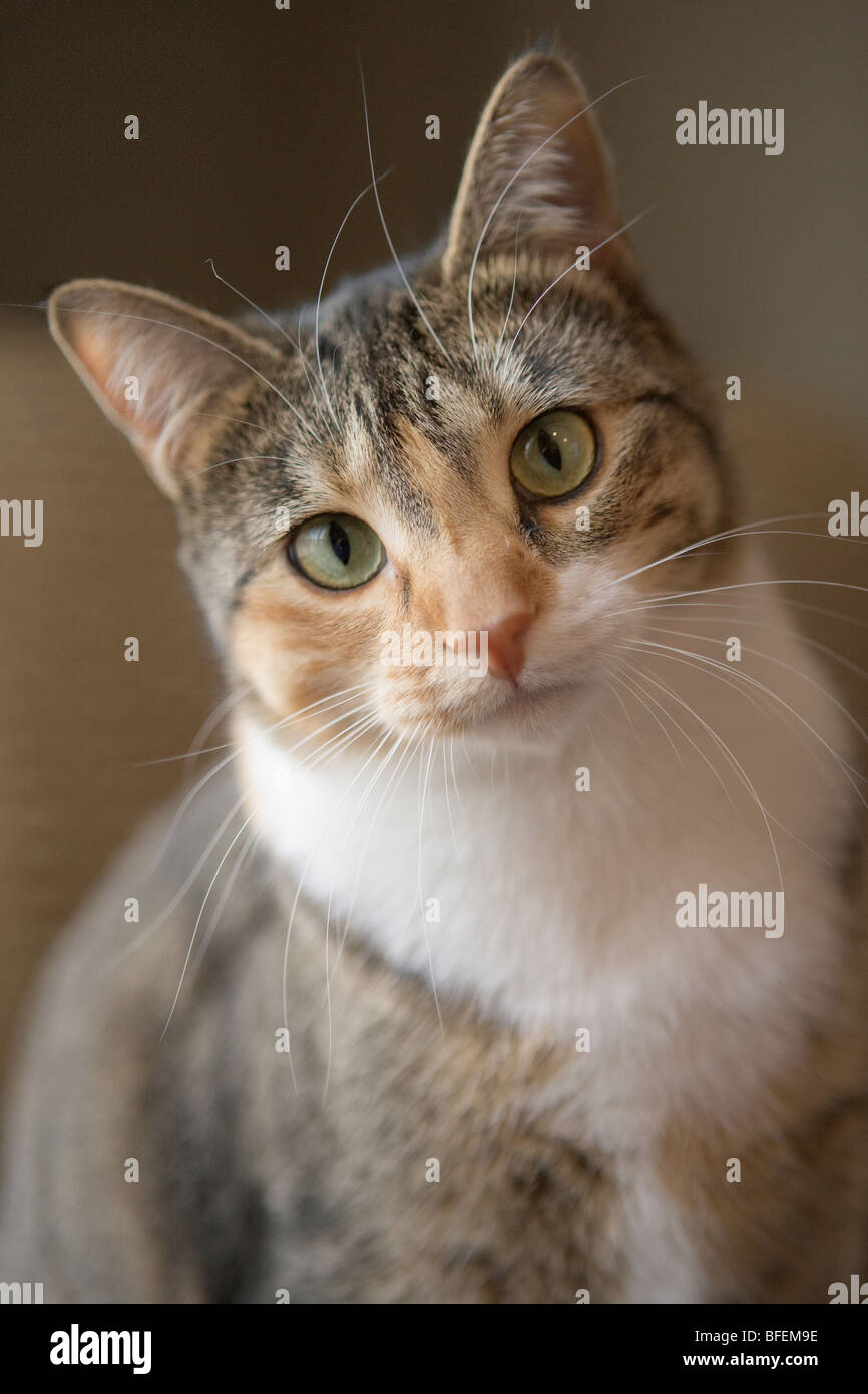 Portrait of mixed breed cat - Stock Image