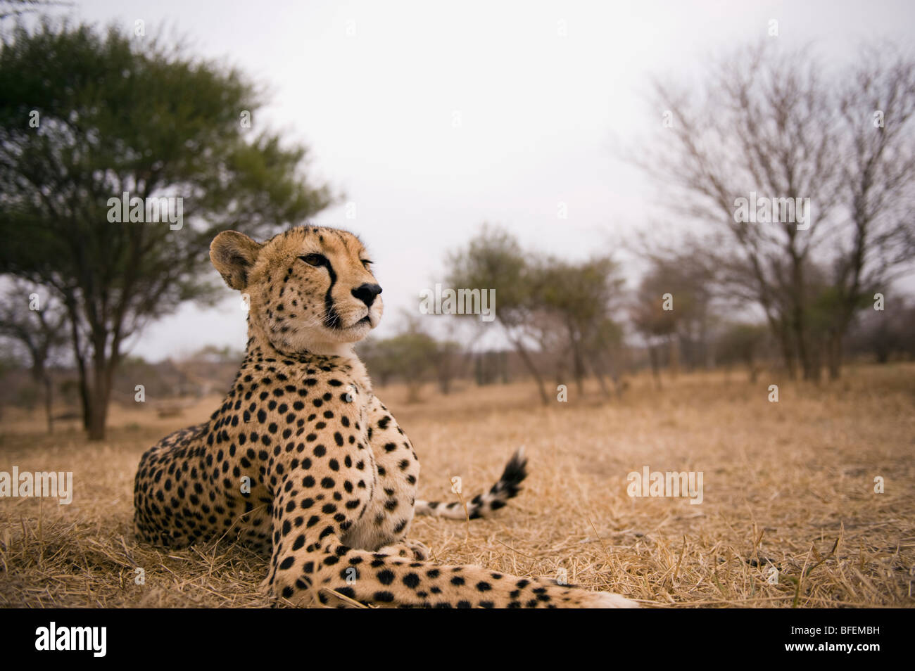 Portrait of Savannah - Stock Image
