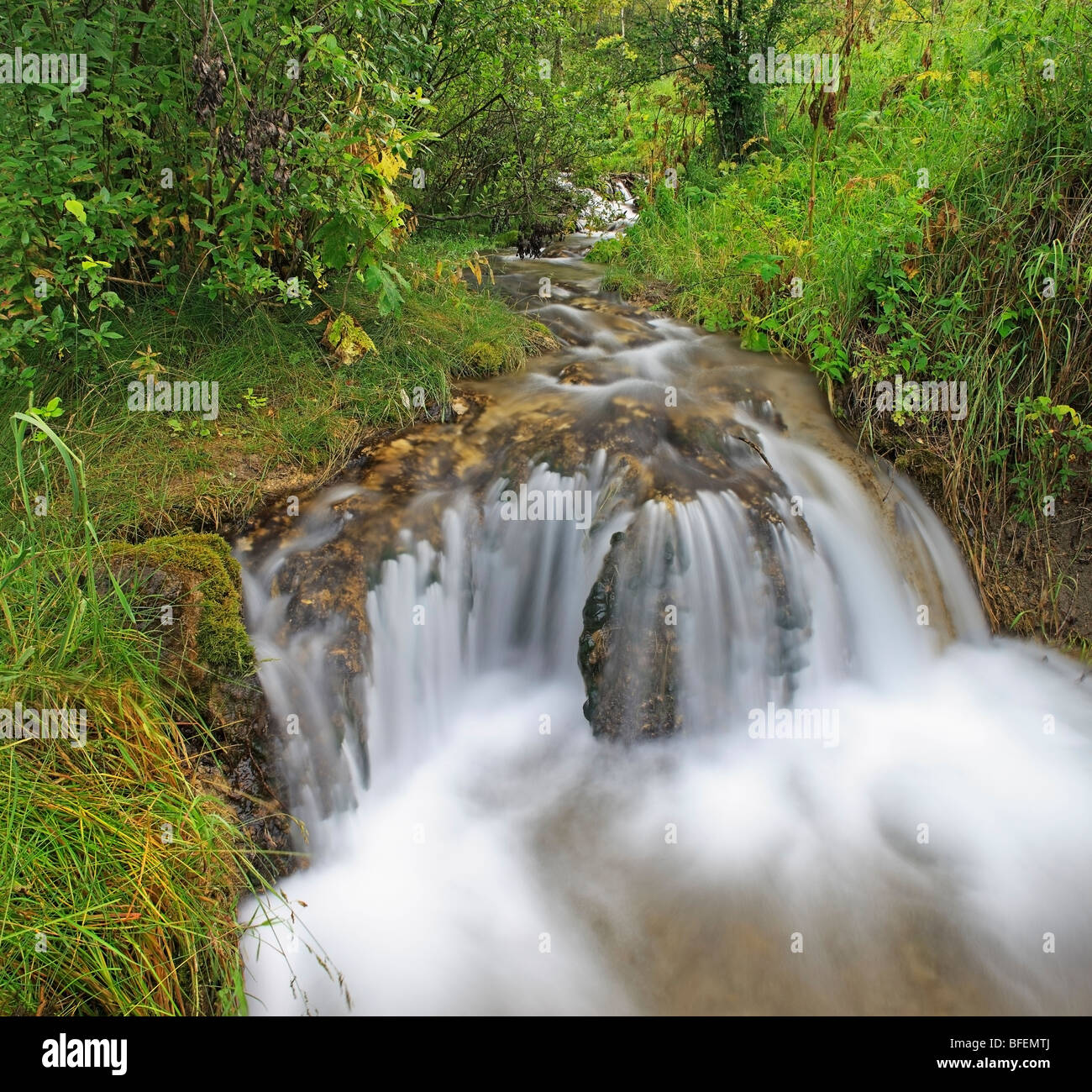 Aspen forest after a spring rain and Big Hill Creek, Big Hill Springs Provincial Park, Alberta, Canada - Stock Image