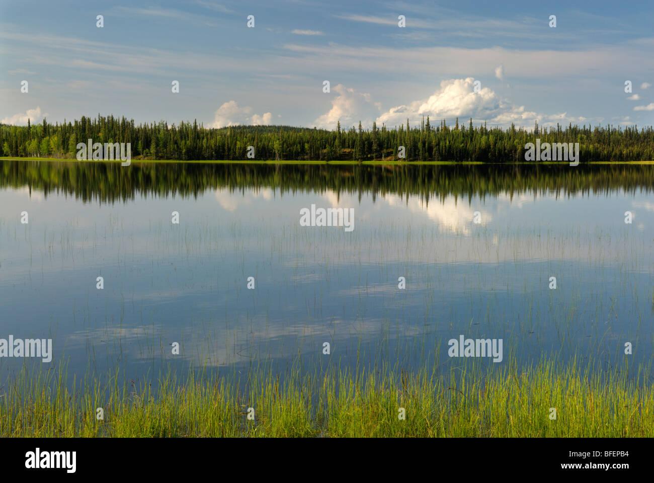 Deadman Lake, Tetlin National Wildlife Refuge, Alaska, United States of America - Stock Image