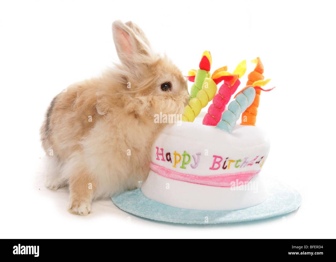 Happy Birthday Rabbit Single Adult Female With Cake Hat Studio