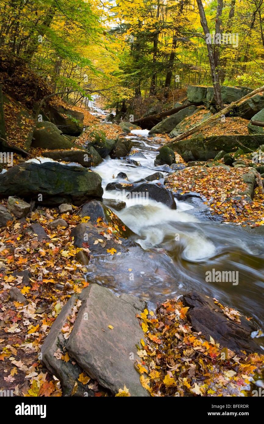 Grindstone Creek in fall, Niagara Escarpment, Bruce Trail, Hamilton, Ontario, Canada - Stock Image