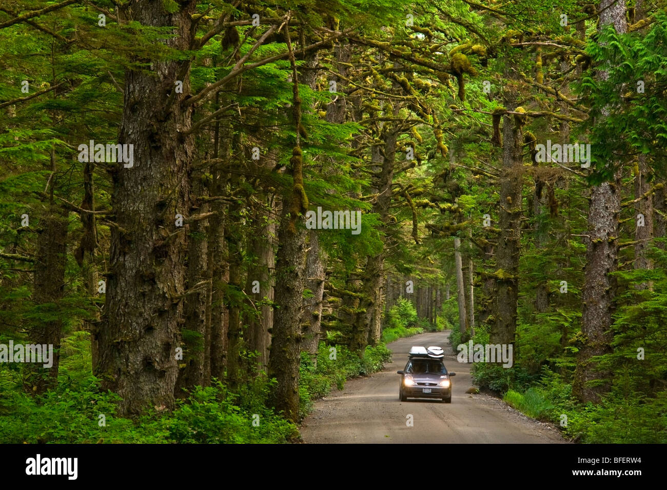 Car on the road to Tow Hill, Naikoon Provincial Park, Queen Charlotte Islands, British Columbia, Canada - Stock Image