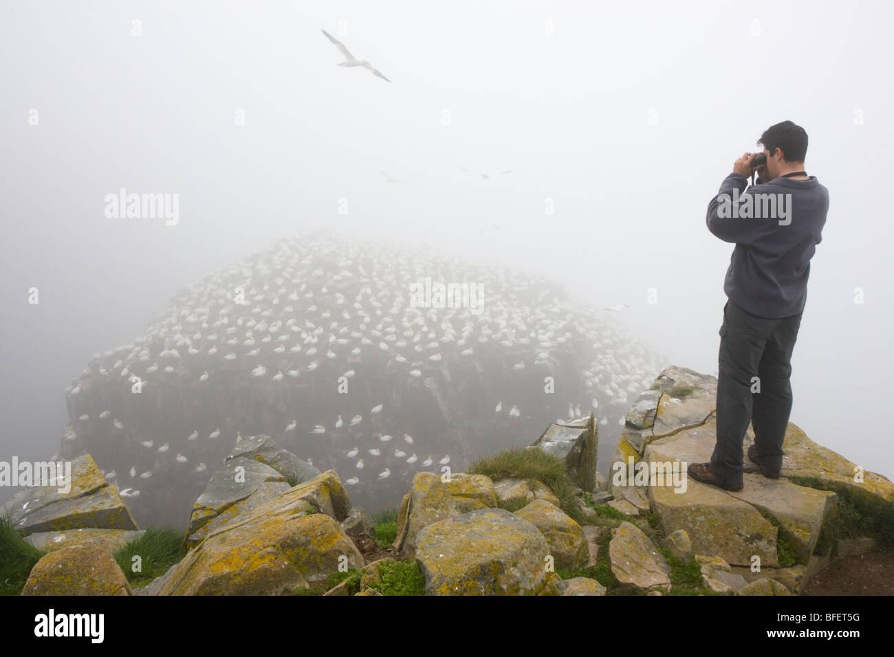 Birdwatcher observing breeding colony of Northern gannets (Morus bassanus) in fog Bird Rock Cape St. Mary's - Stock Image