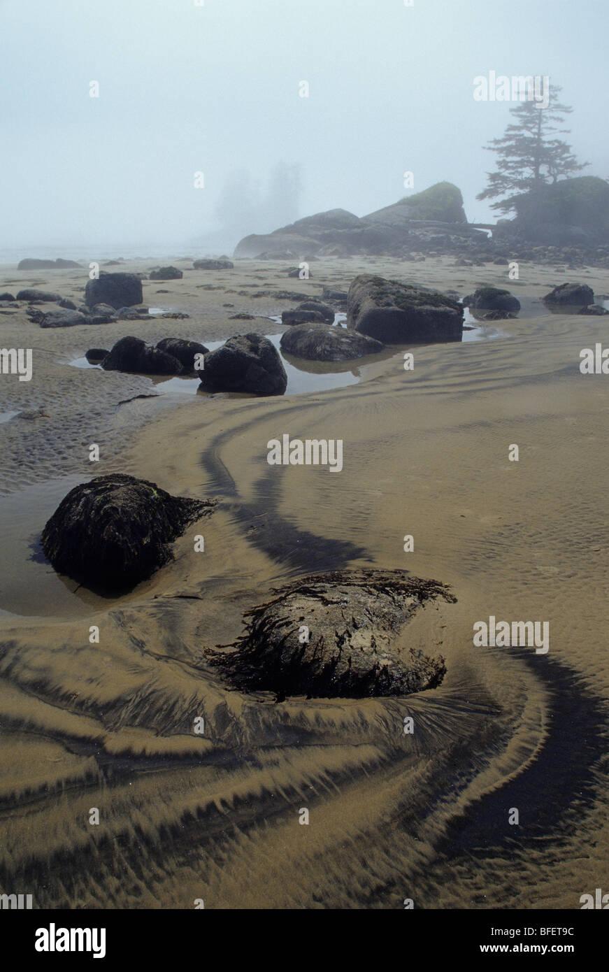 Beach strand in fog, Burnett Bay, British Columbia, Canada - Stock Image