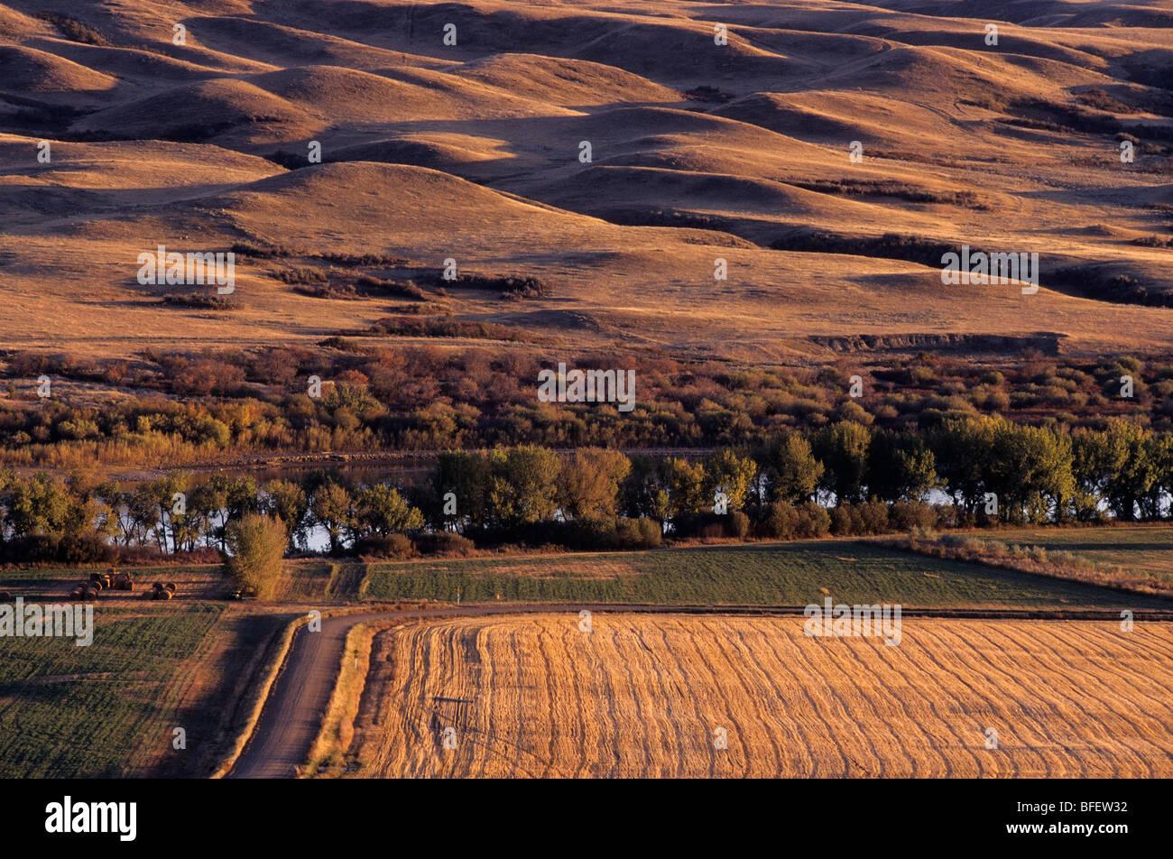 Habitat fragmentation near Leader, Saskatchewan, Canada - Stock Image
