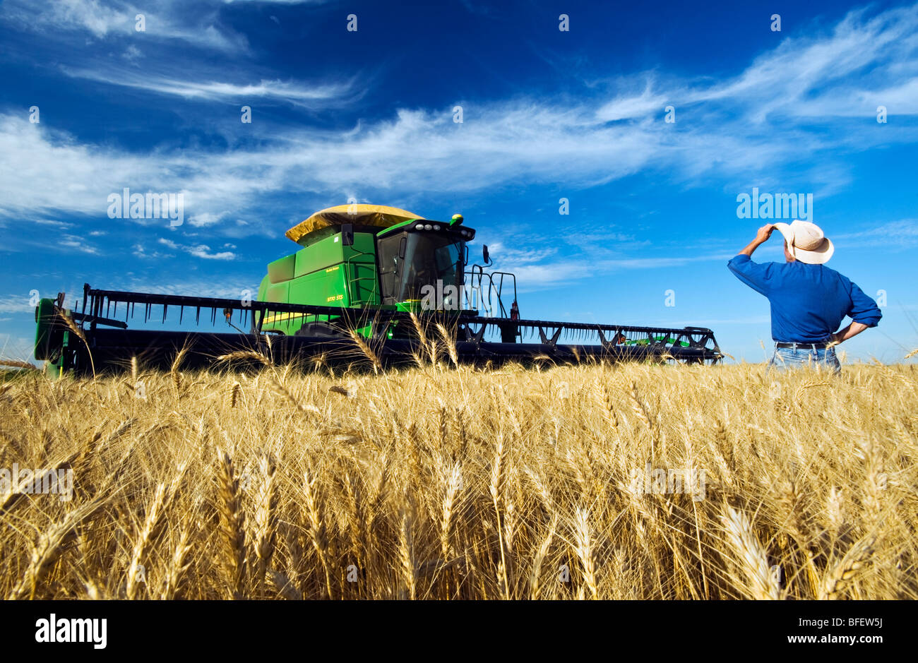 Farmer looks out over his harvest ready winter wheat crop with his combine harvester in background near Winkler - Stock Image