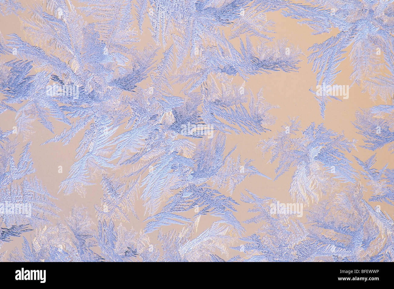 Close-up of ice crystals on window pane, Saskatchewan, Canada - Stock Image