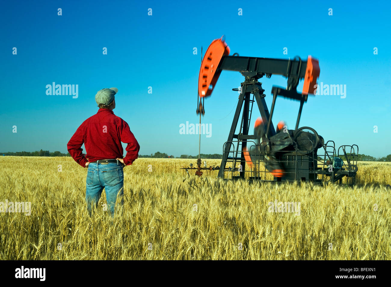 a man looks out over a harvest ready wheat field with an oil pumpjack in the background, near Sinclair, Manitoba, - Stock Image