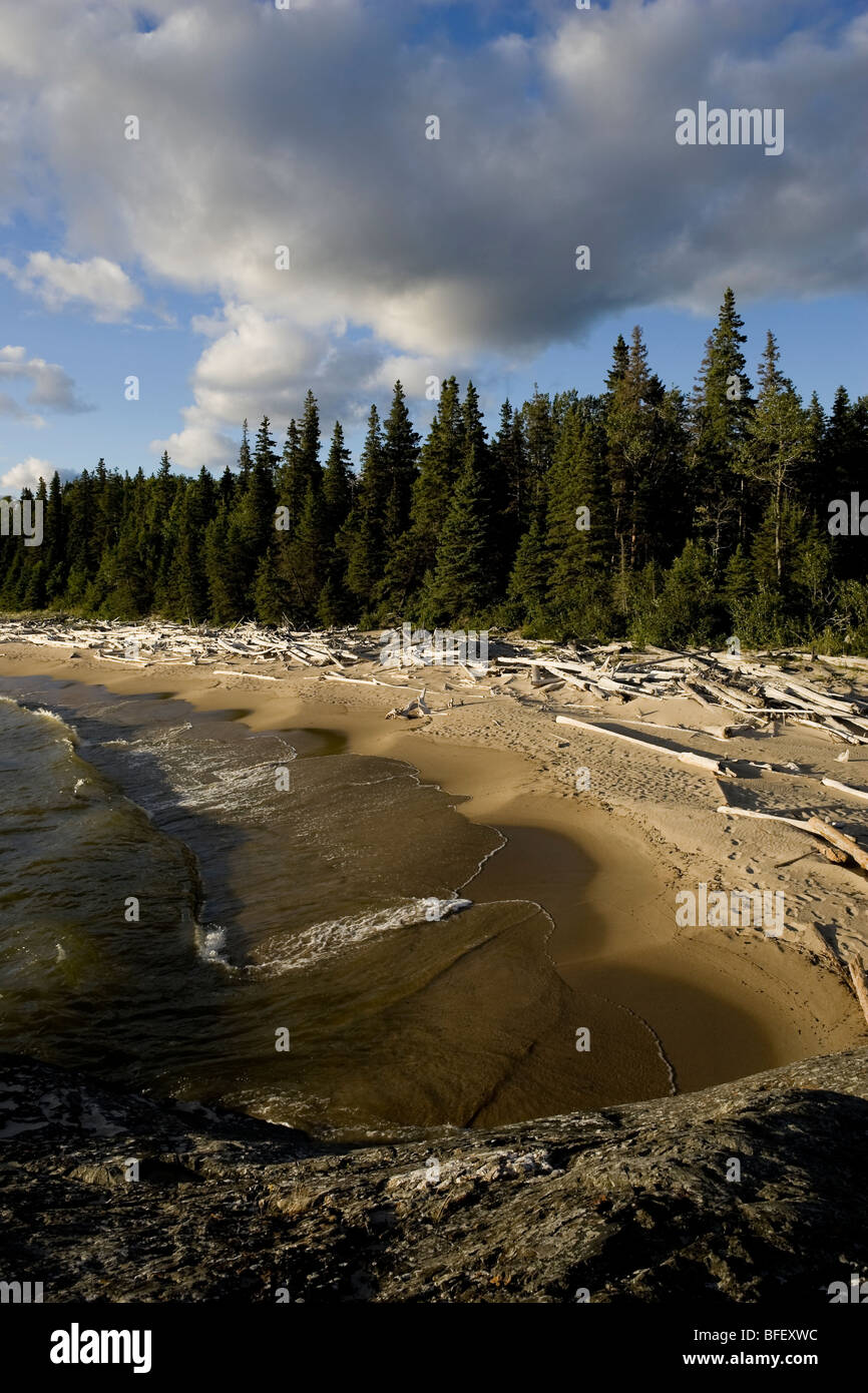 Driftwood littered sand beaches and boreal forest along the shores of Lake Superior in Pukaskwa National Park, Ontario, - Stock Image
