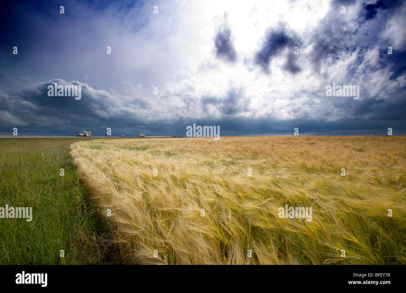 Thunder storm moving over grain field, Ridge Road 221, Alberta, Canada, weather, cloud, truck, car, agriculture - Stock Image