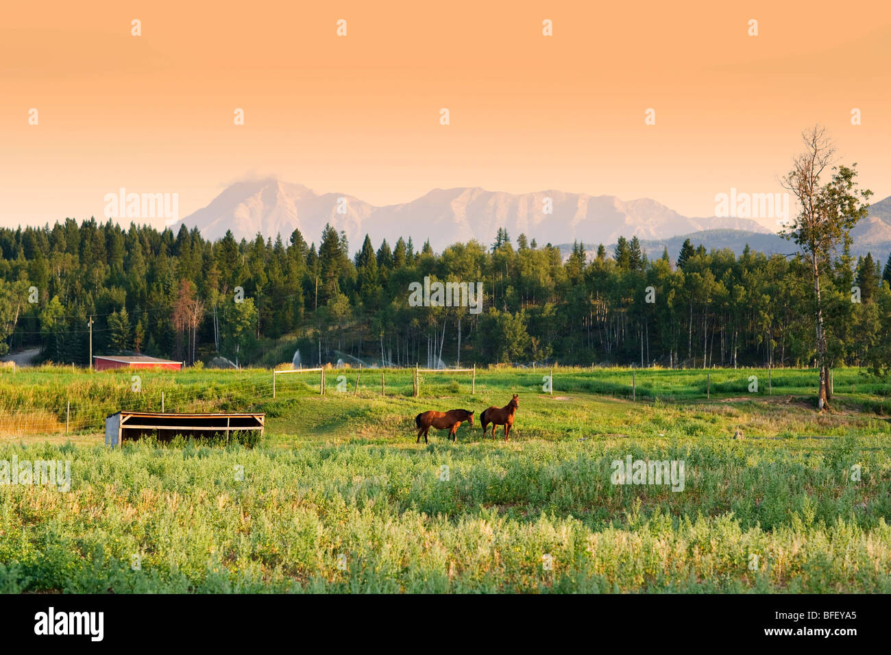 Horses, Jaffery, British Columbia, Canada, sunrise, mountain - Stock Image