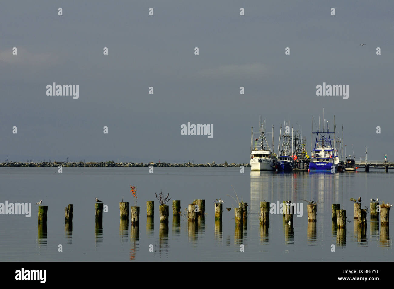 Three fishing vessels moored at Steveston,BC. Cut off wood pylons in foreground with sea gulls on them. - Stock Image