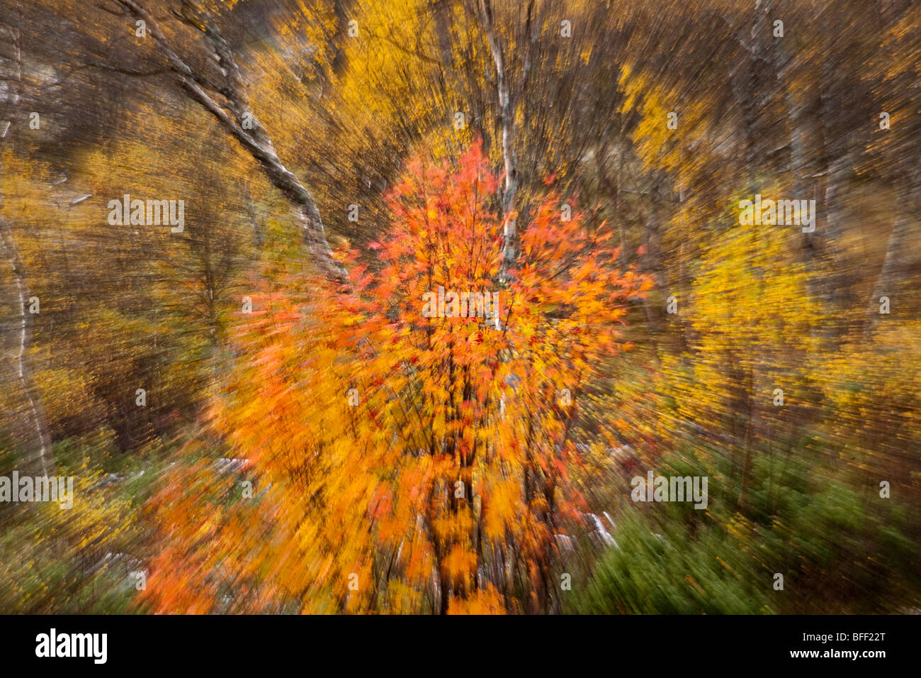 Fjell and birch forest in autumn Jämtland Sweden - Stock Image