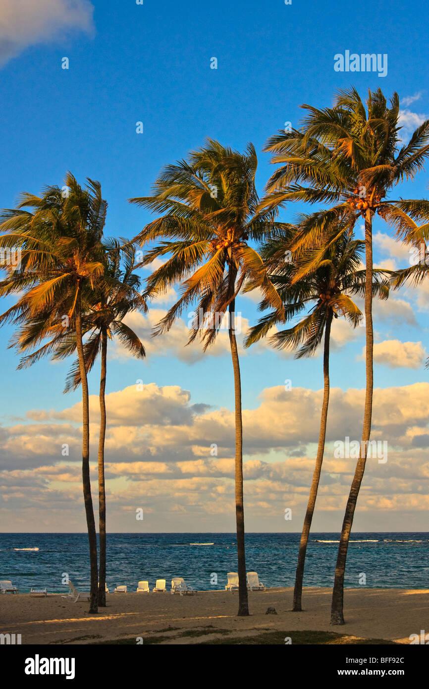 Tall palm trees on a Cuban beach, sunset Stock Photo