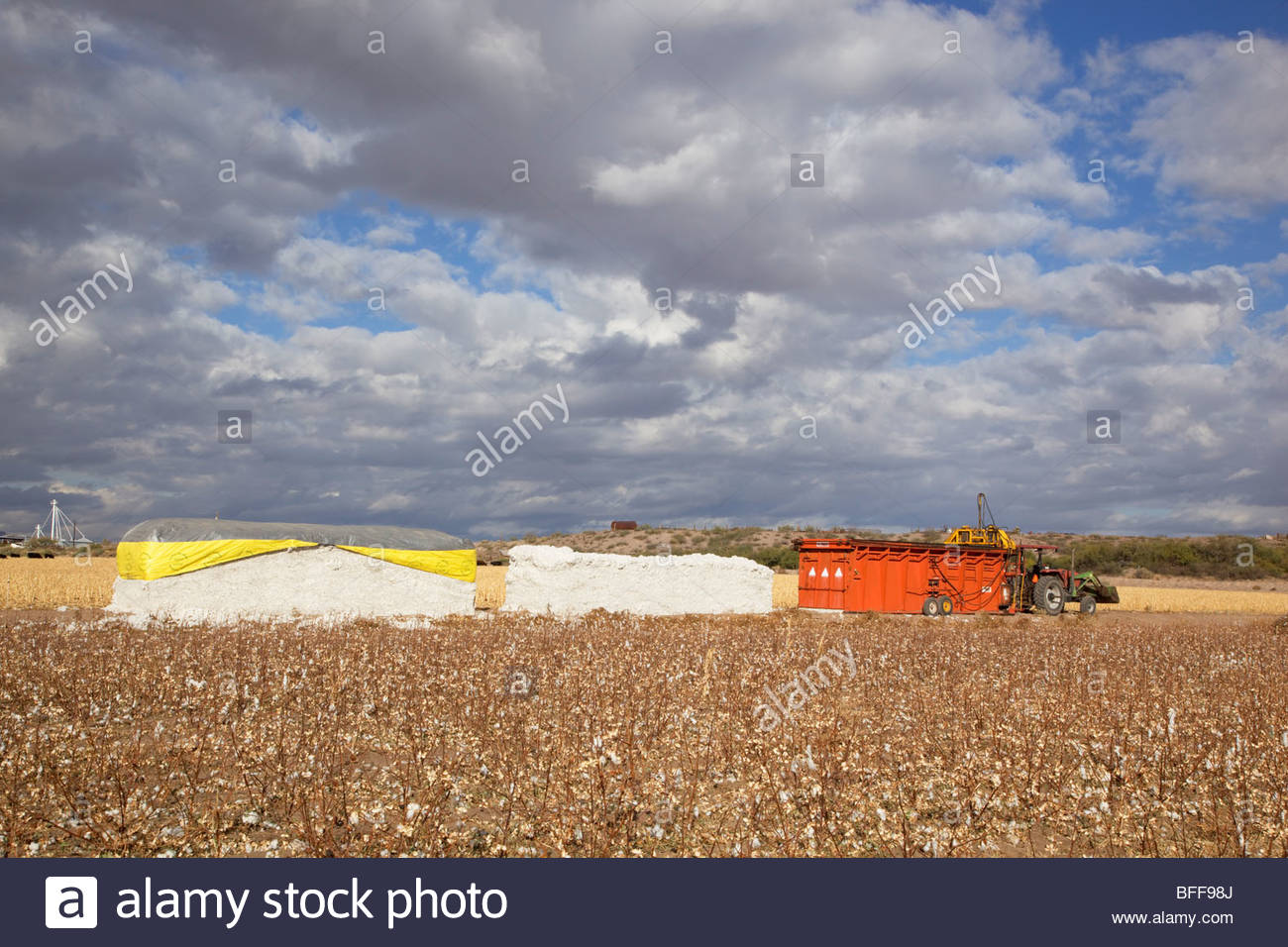 Cotton baler compactor cotton bales alongside small freshly picked cotton field  'New Mexico' - Stock Image