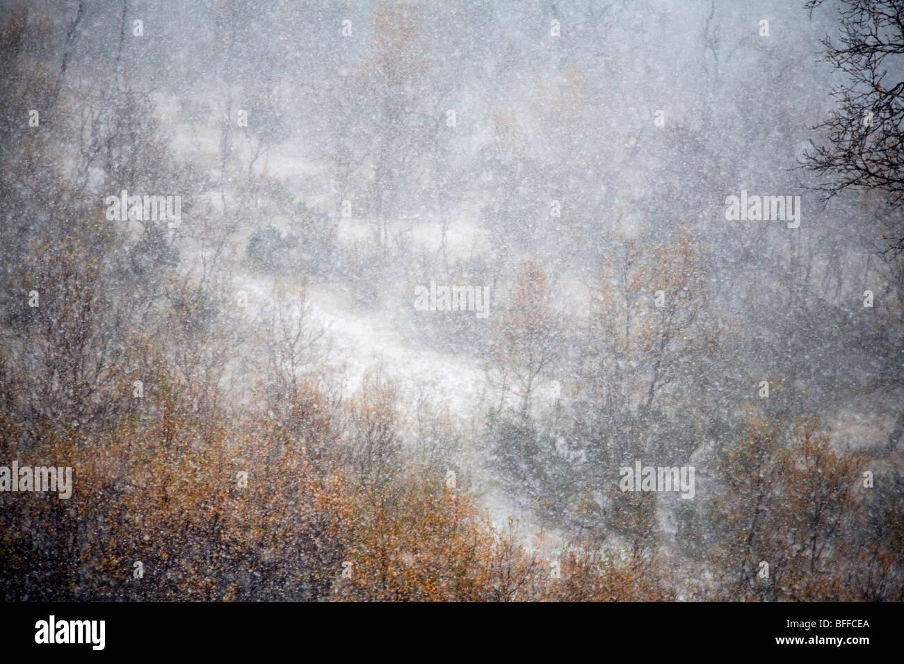 snowstorm snowfall - Stock Image