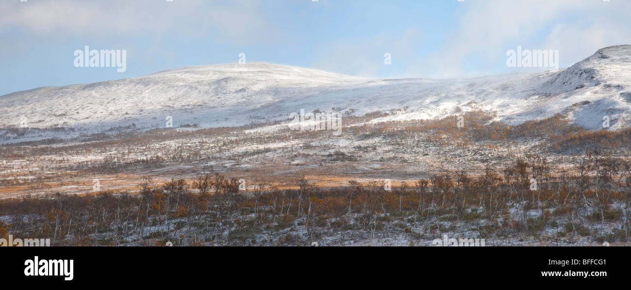 birch forest in autumn with first snow and view over snowy forest and snowy peaks of Storulvån fjells - Stock Image