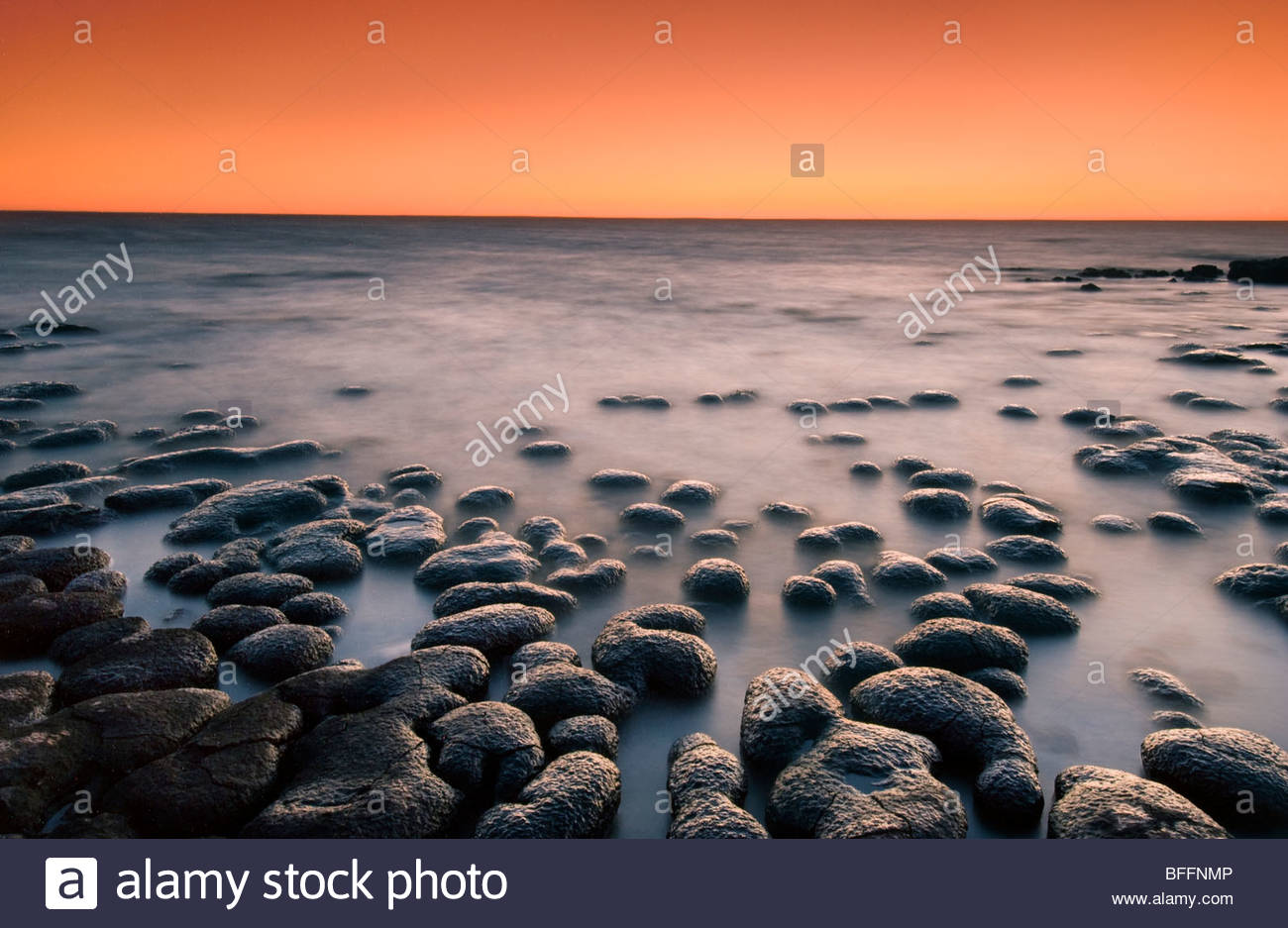 Stromatolites at dusk, Shark Bay, Western Australia - Stock Image