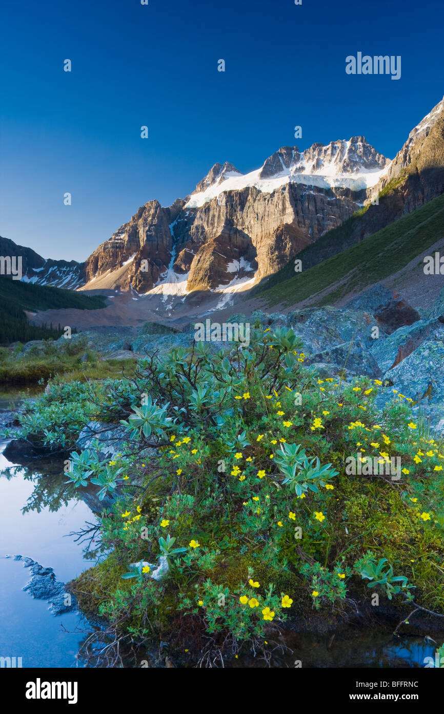 Wildflowers along lakeshore with Mount Fay in the background, Lower Consolation Lake, Banff National Park, Alberta, - Stock Image