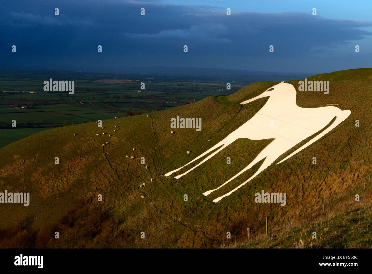 Westbury white horse, Westbury hill, Wiltshire, England, UK Stock Photo