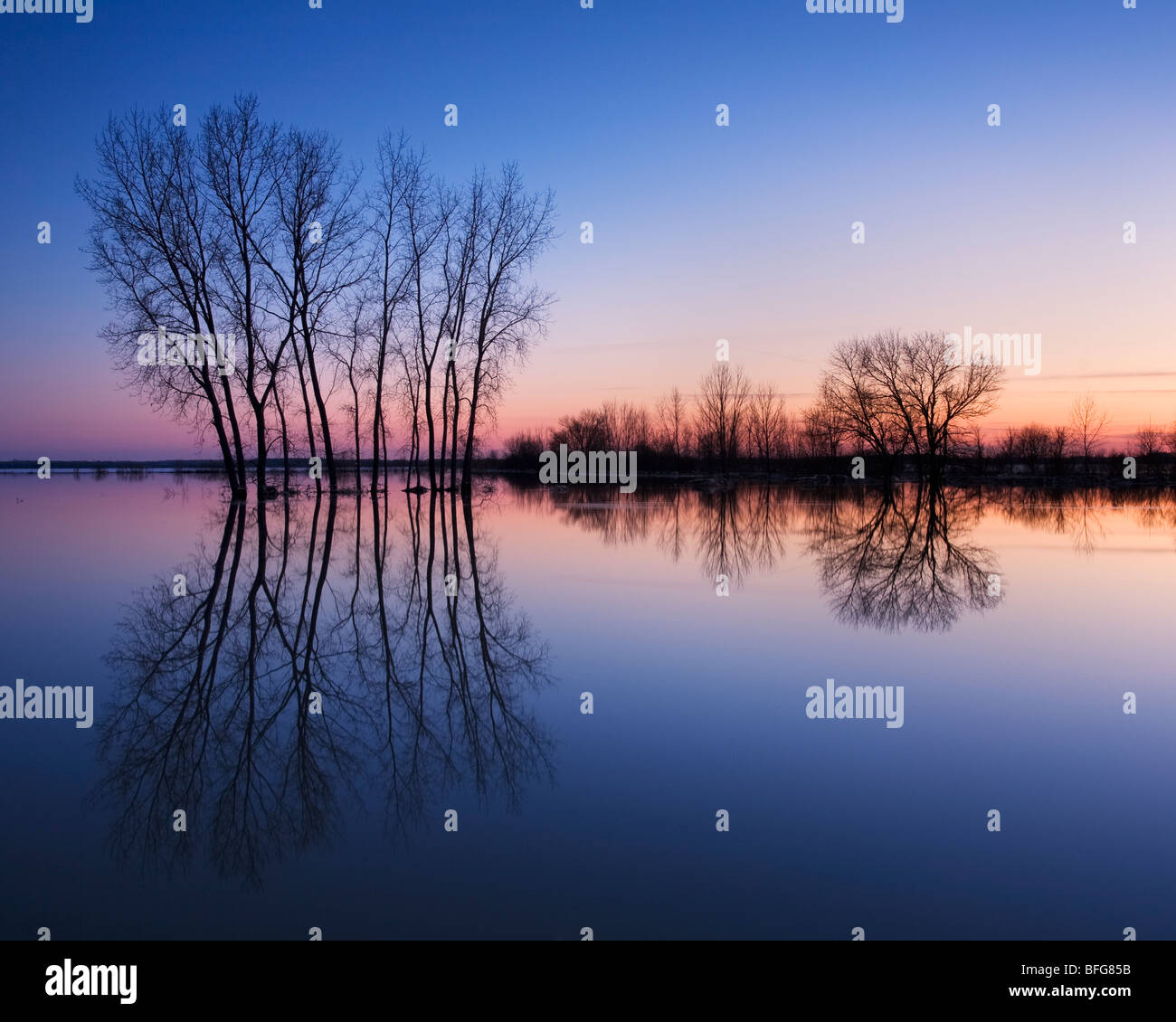 Trees are reflected in spring flood waters laying on the fields of rural Grand Bend, Ontario, Canada - Stock Image