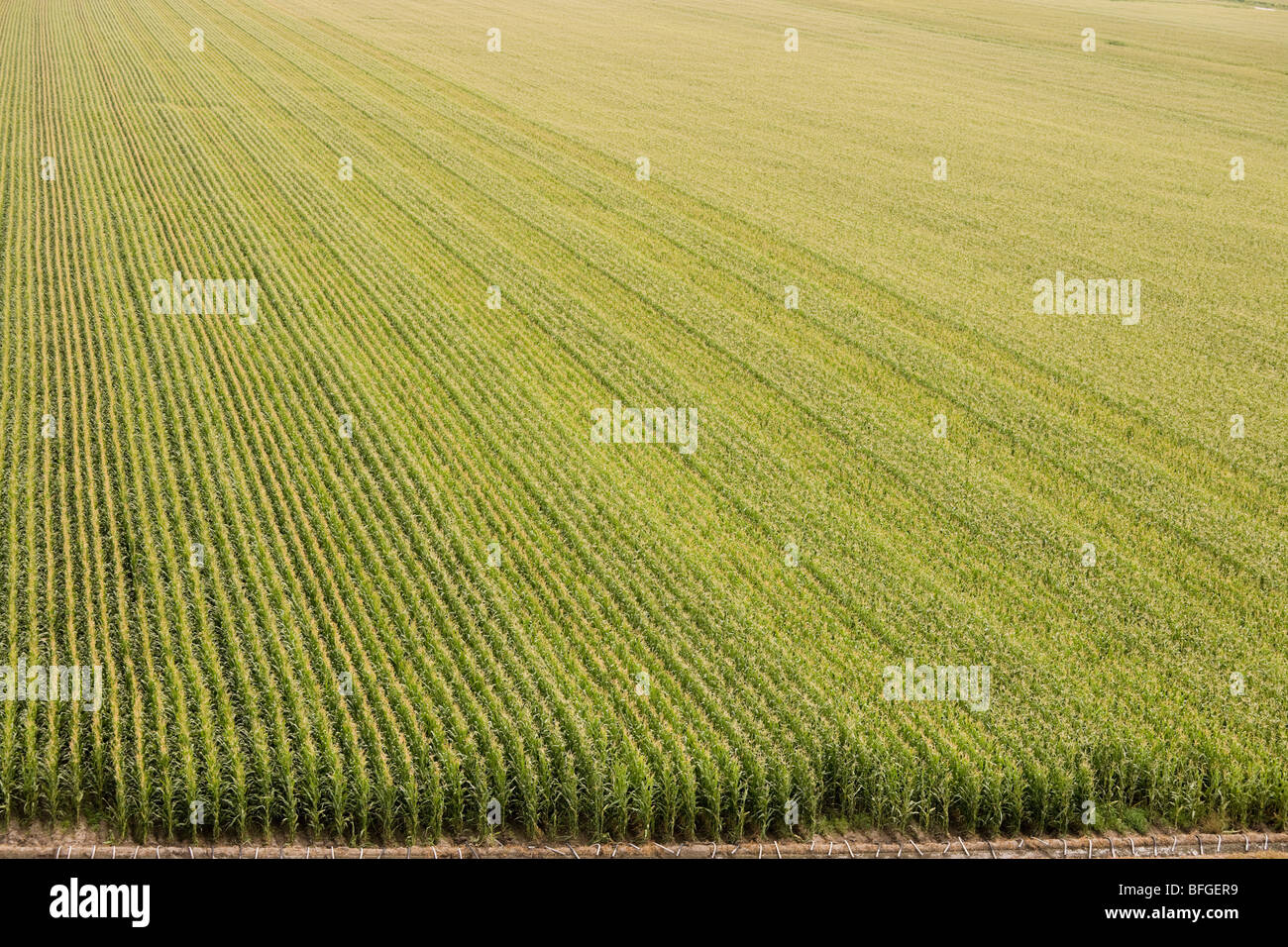 Aerial view of an American corn maize field with irrigation in summer. North Platte, Nebraska, Great Plains, USA - Stock Image