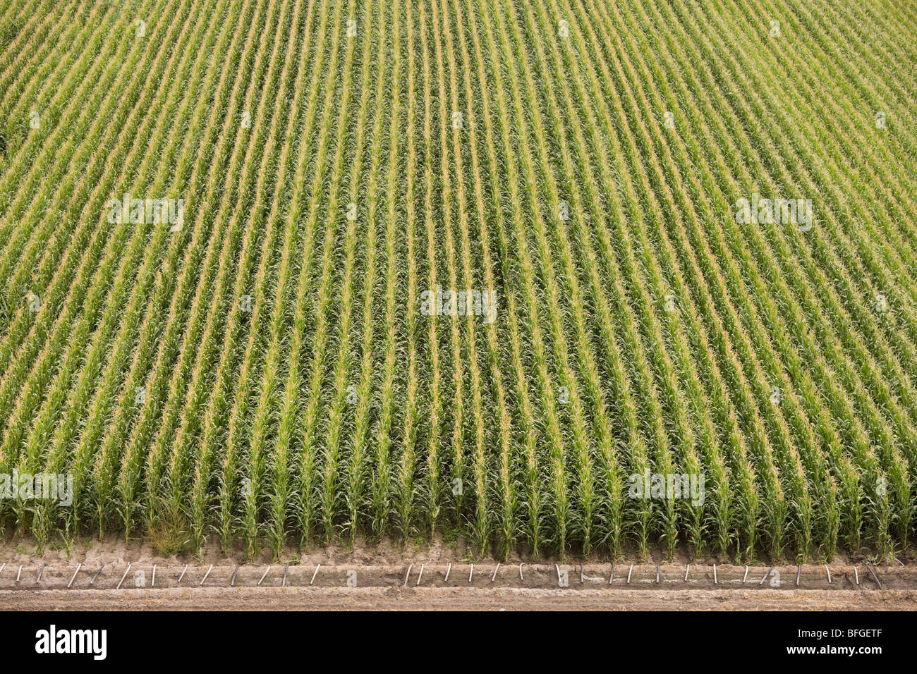 Aerial view of an American corn maize field with irrigation in summer. North Platte, Nebraska, NE US USA. - Stock Image